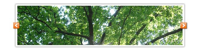 Visuel diaporama arbre Pays de Tronçais
